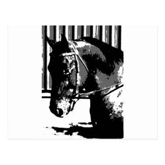 BW Stallion Horse Postcard