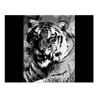 BW Tiger Postcard