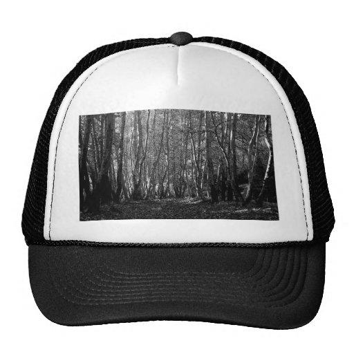 BW Trees Trucker Hats