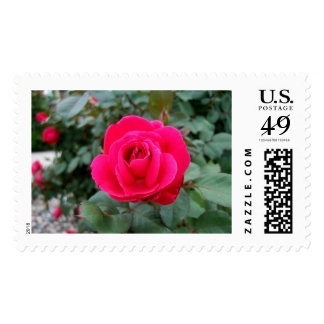 BY ANY OTHER NAME! (Rose 3) ~ Postage Stamp