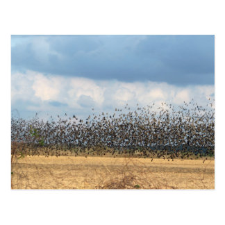 bye-bye blackbird postcard