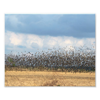 bye-bye blackbirds photograph
