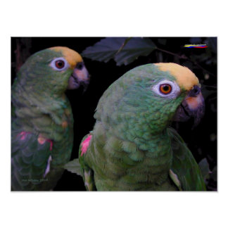 C001 Parrots Posters