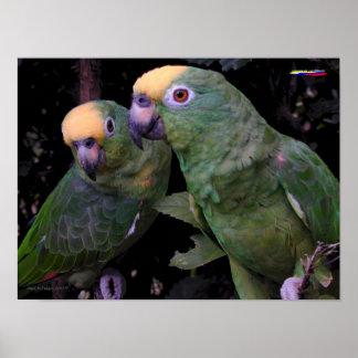 C002 Parrots Poster