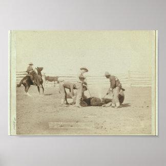 """c.1888 """"Branding Calves on Roundup"""" Poster"""