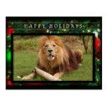 c-2011-african-lion-019 tarjetas postales