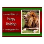 c-2011-african-lion-023 tarjetas postales