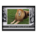 c-2011-african-lion-034 postales