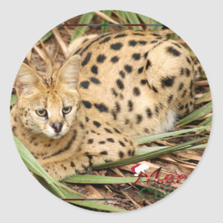 c-2011-african-serval-037 classic round sticker