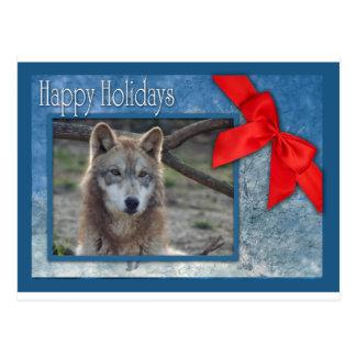 c-2011-grey-wolf-001 postcard