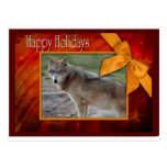 c-2011-grey-wolf-002 post cards