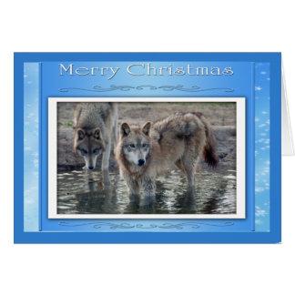 c-2011-grey-wolf-006 card