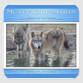 c-2011-grey-wolf-006 square sticker