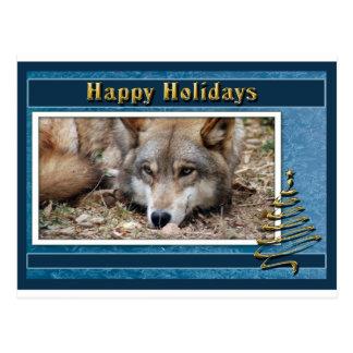 c-2011-grey-wolf-007 postcard