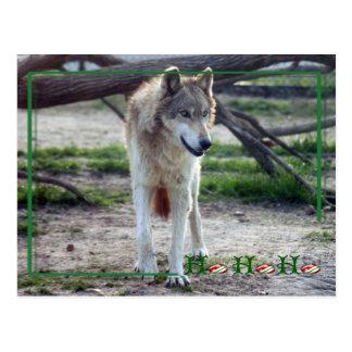 c-2011-grey-wolf-008 postcard