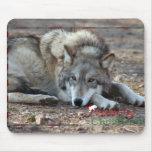 c-2011-grey-wolf-009 tapete de ratón