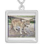c-2011-grey-wolf-011 collares