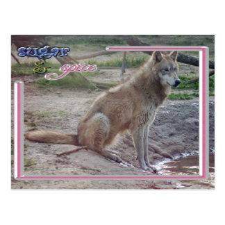 c-2011-grey-wolf-013 postcard