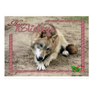 c-2011-grey-wolf-014 postcard