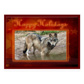 c-2011-grey-wolf-015 postcard