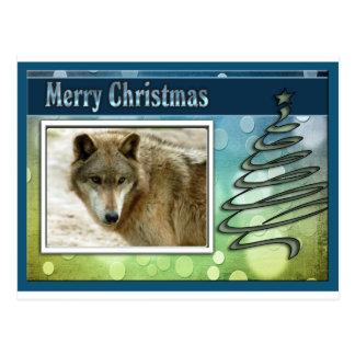 c-2011-grey-wolf-016 postcard