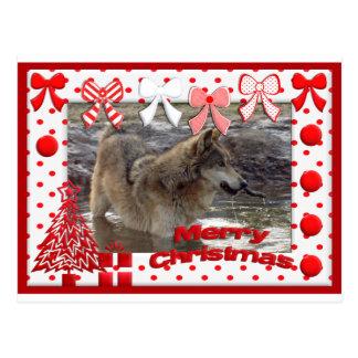 c-2011-grey-wolf-017 postcard