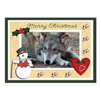 c-2011-grey-wolf-018 postcard