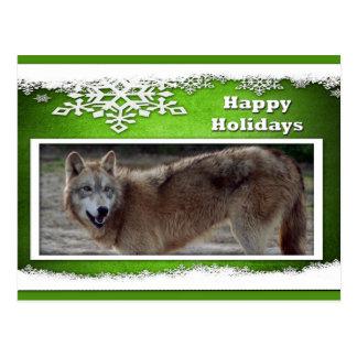 c-2011-grey-wolf-019 postcard