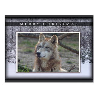 c-2011-grey-wolf-020 postcard