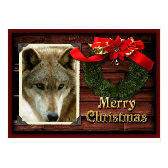 c-2011-grey-wolf-021 postcard