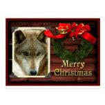 c-2011-grey-wolf-021 tarjetas postales