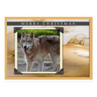 c-2011-grey-wolf-023 postcard