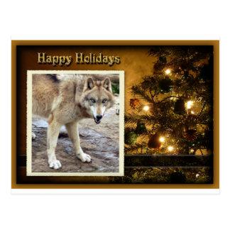 c-2011-grey-wolf-024 postcard