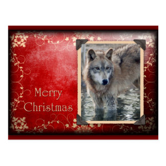 c-2011-grey-wolf-028 postcard