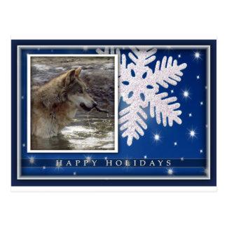 c-2011-grey-wolf-030 postcard