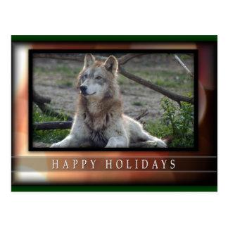 c-2011-grey-wolf-034 postcard