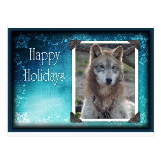 c-2011-grey-wolf-035 postcard