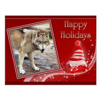 c-2011-grey-wolf-036 postcard