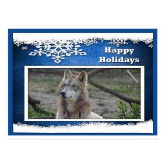 c-2011-grey-wolf-037 postcard