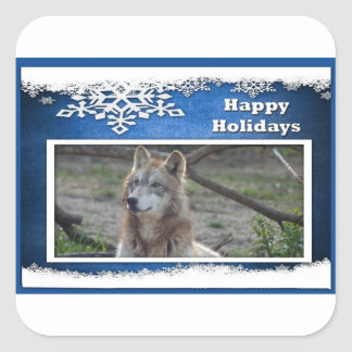 c-2011-grey-wolf-037 square sticker