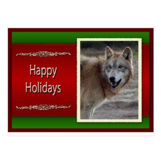 c-2011-grey-wolf-041 postcard