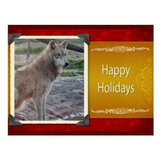 c-2011-grey-wolf-042 postcard
