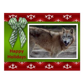 c-2011-grey-wolf-046 postcard