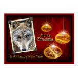 c-2011-grey-wolf-047 postales