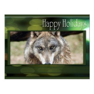 c-2011-grey-wolf-049 postcard