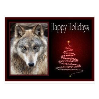 c-2011-grey-wolf-050 postcard