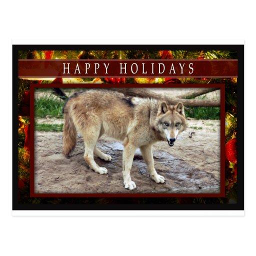 c-2011-grey-wolf-051 post card