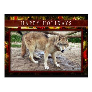 c-2011-grey-wolf-051 postcard