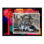 c-2011-grey-wolf-052 post cards