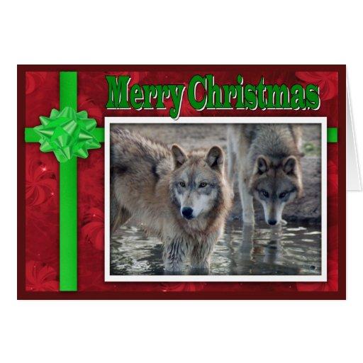 c-2011-grey-wolf-053 greeting card